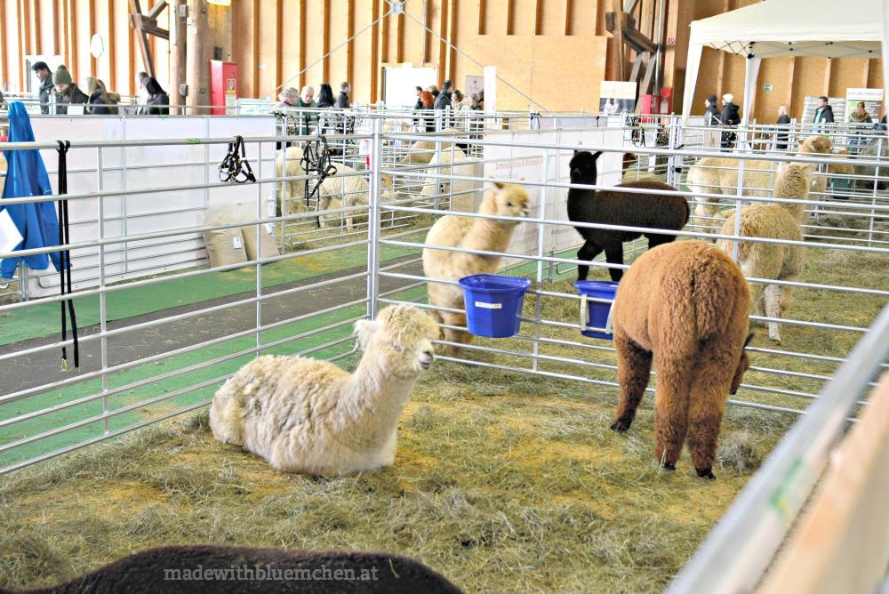 Alpaka Expo und Projekte - made with Blümchen